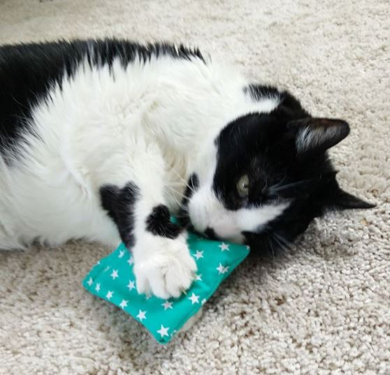 katzenminze catnip dufts ckchen spielzeug katze. Black Bedroom Furniture Sets. Home Design Ideas