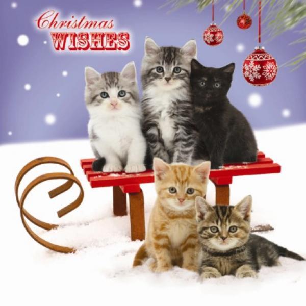 weihnachtskarte sledging kittens schlitten fahren. Black Bedroom Furniture Sets. Home Design Ideas